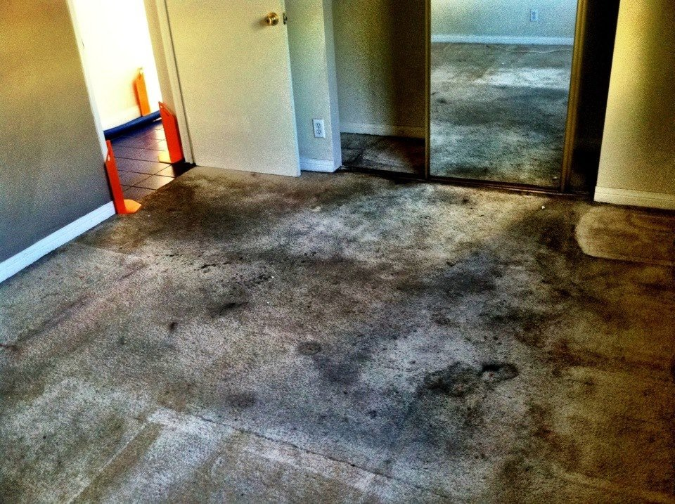 Most Effective Carpet Cleaning D.I.Y. Tips in Lake Elsinore Carpet Cleaners