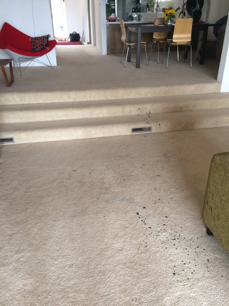 Keeping Your Carpets Smelling Fresh in Lake Elsinore Carpet Cleaners